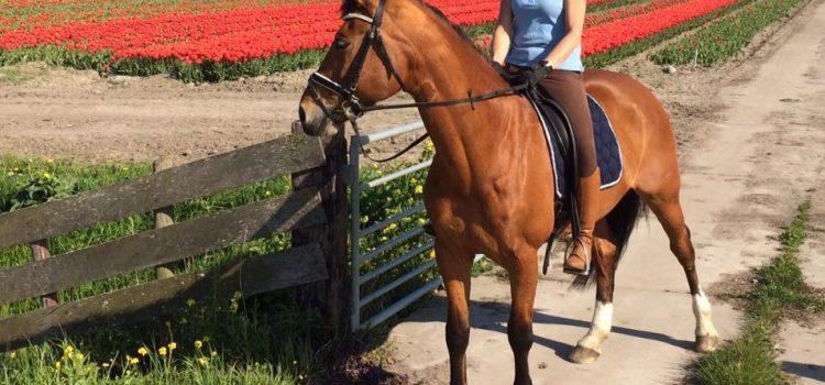 Door deze combinatie van Rianne en Angelique en de juiste instructrice ben ik weer heerlijk aan het rijden en genieten met mijn paard!